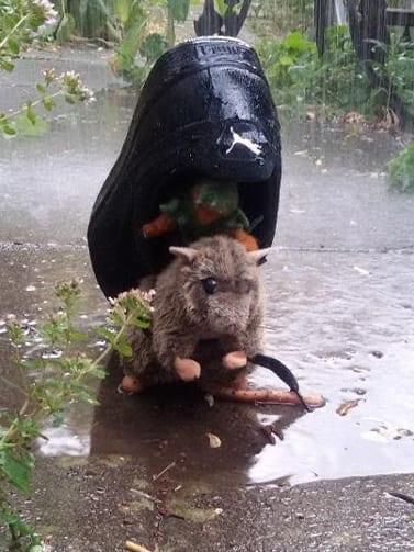 Rattenpost Vorher